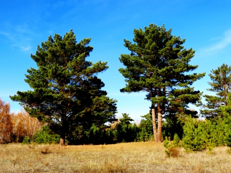 at came: The autumn time came to forest-steppes of Altai
