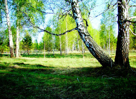 at came: The early spring came to the woods of Altai