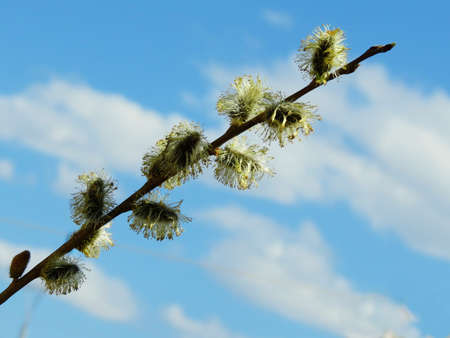 were:                                Were dismissed in the spring of a kidney on a willow branch