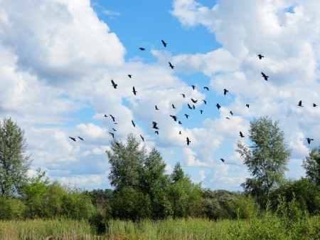 gather:                                In an early autumn rooks gather in packs