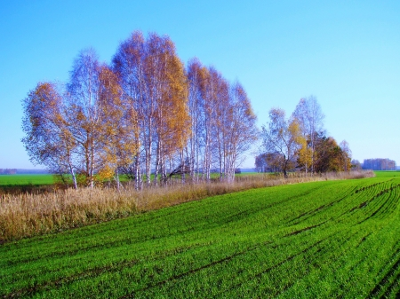 Winter shoots brightly turned green in the field of the farmer in the fall photo