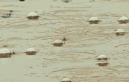 oorzaken: De onophoudelijke zomerregen veroorzaakt bubbels op zwembaden