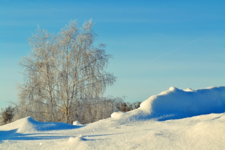 at came: The winter Siberian came to forest-steppes of Altai