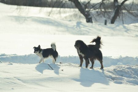 Stray dogs run on the rural street in the winter morning photo