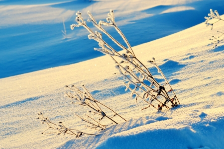 at came: The frosty snow winter came to forest-steppes of Altai