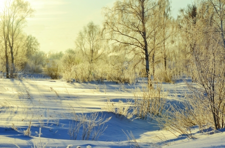 The frosty snow winter came to forest-steppes of Altai photo