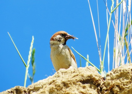 at came:                                    The nesting time at ordinary sparrows came
