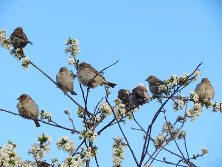 at came:                                The nesting time at ordinary sparrows came Stock Photo