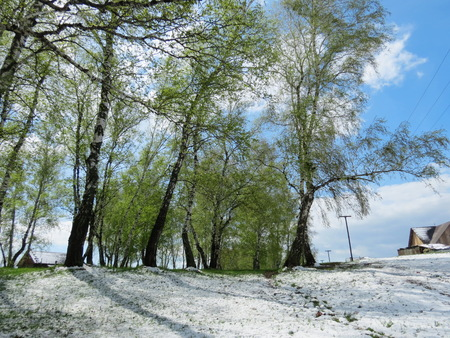 White snow filled up a green grass in May photo
