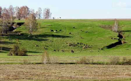 at came:    Warm springtime came to ample steppe Altaya