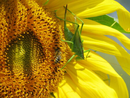 to proceed: At warm year day insect steppes proceed with duplication