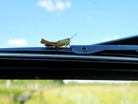 duplication:             At warm year day insect steppes proceed with duplication