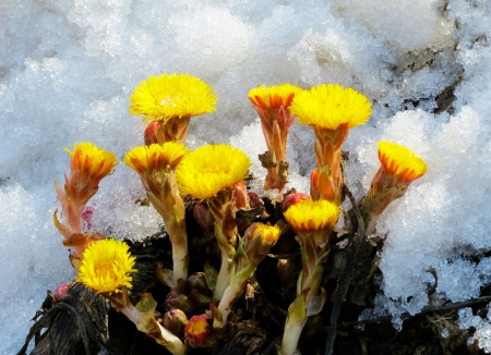 flowerses:      First bright flowerses coils foot appear in steppe