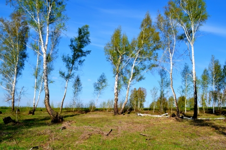 at came: Came unusual warm springtime in steppe Altaya