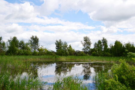 bulrushes: Summer in steppe and on lake sprouts many colour