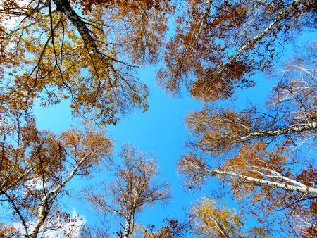 bull s eye:              Autumn has ed sheet in wood on tree                   Stock Photo