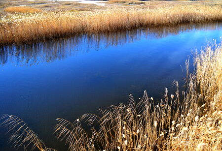 osier: Summer lake