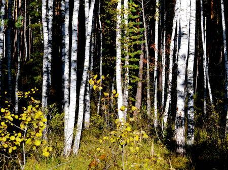 ed: Autumn has ed sheet in wood on tree Stock Photo