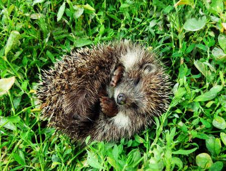 E onok sleeps on green grass in the garden photo