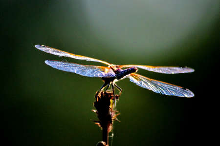 invertebrate: Insect of the steppes present greater group an invertebrate animal Stock Photo