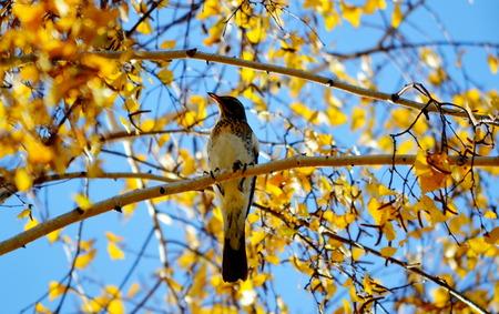 duplication: Steepe birds Altaya from big amount type