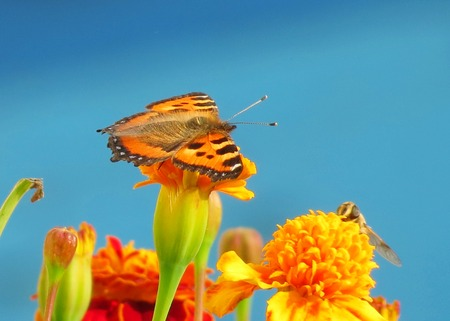 invertebrate: Insect present group an invertebrate from butterfly, dragonflies, bees, grasshopper, spider and others