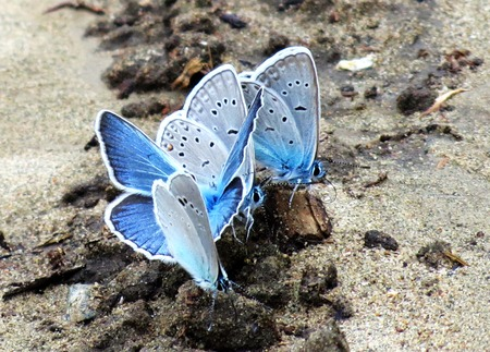 invertebrate: Insect present group an animal from butterfly, dragonflies, and other invertebrate