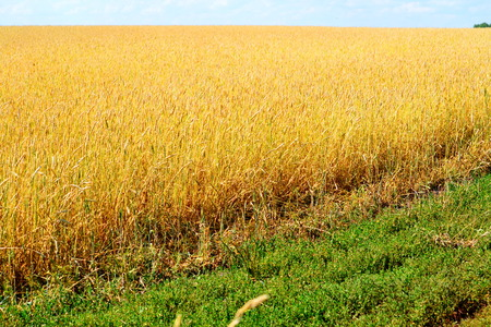 wild oats: Different agricultural cultures grow On enormous floor farmers
