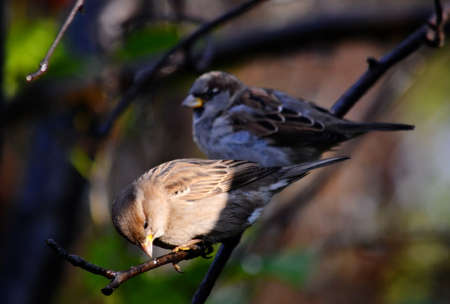 duplication: Small birds of the steppes form greater group