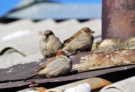 pigeon egg: toile Stock Photo