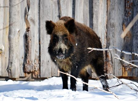 ungulate: Wild animals present greater group an animal inhabitting steepe and timber regions Altaya Stock Photo