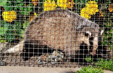 ardilla: Los animales salvajes presentan mayor grupo una estepa animales inhabitting y regiones madereras Altaya