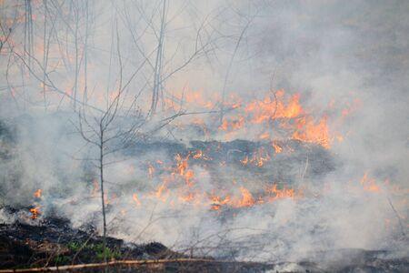 ほとんどの場合人により表示されている木材の自然火災 写真素材
