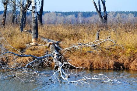 Beautiful nature Altaya pleases eye of the watcher Imagens