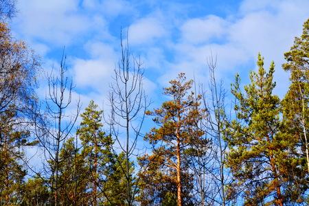 Beautiful nature Altaya pleases eye of the watcher Banco de Imagens