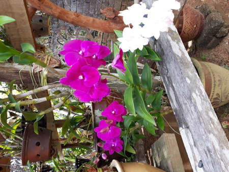 Orchid plant collection. Some of the Orchids are native to regions in the tropical forest in Asia. Orchids are one of the favorite flowers among mothers in Malaysia.