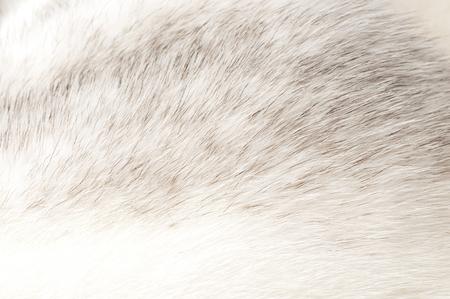 luxurious mink fur texture close-up background