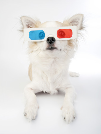 chihuahua with 3d glasses lying over white background photo