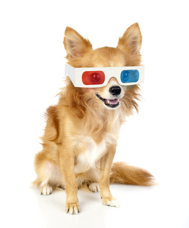 stereoscope: red chihuahua dog with 3d glasses isolated on white looking at camera