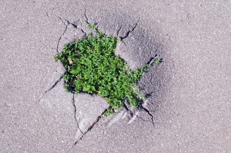 the fittest: new young green grass sprouted through cracks in asphalt