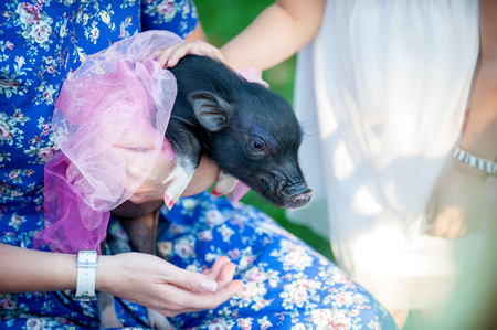 mini pig pet with  girls wearing beautiful dresses