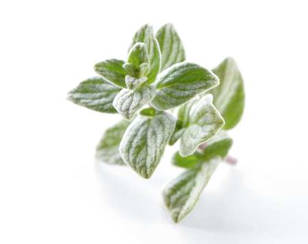 Oregano (Origanum) leaves close-up on white  background