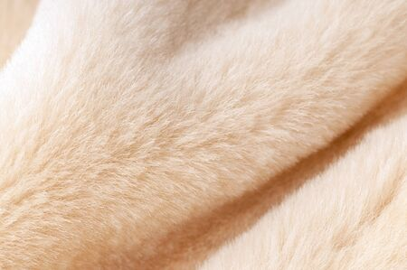Natural dressed beige sheepskin fur texture close-up with beautiful folds background