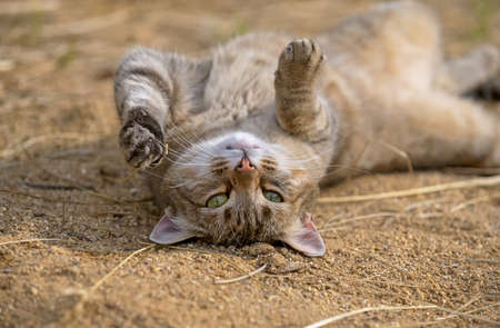 cute red cat with green eyes and pink nose lying upside down in the sun