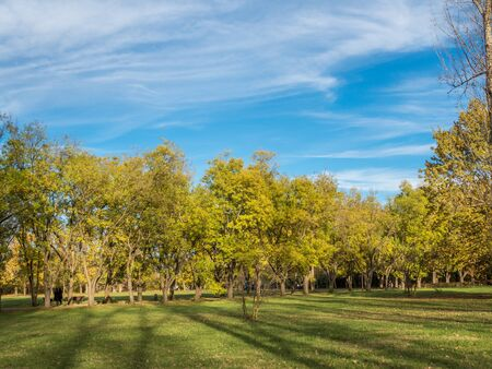 A pedestrian walk through the sunny park raises mood and well-being.