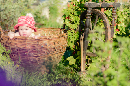 Amazing ukrainian little baby is in the garden and eats red berries along the spinning wheel Stock Photo