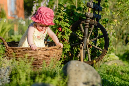 Amazing little baby is in the garden and eats red berries along the spinning wheel