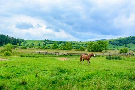 Amazing Landscape. Beautiful horse on the background of Ukrainian Carpathian mountains Stock Photo