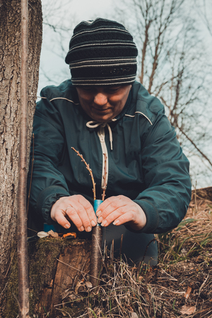 A gardener's woman clogs a cut-off part of the grafted tree to prevent rotting at this place in close-up 2019 Reklamní fotografie