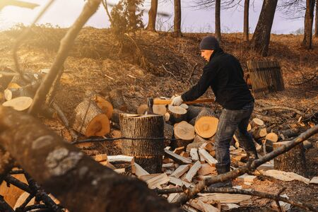 A chilly man harvests wood for cold winter cutting a thick solid ash tree